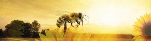 Bee bg - Ozmedia UK